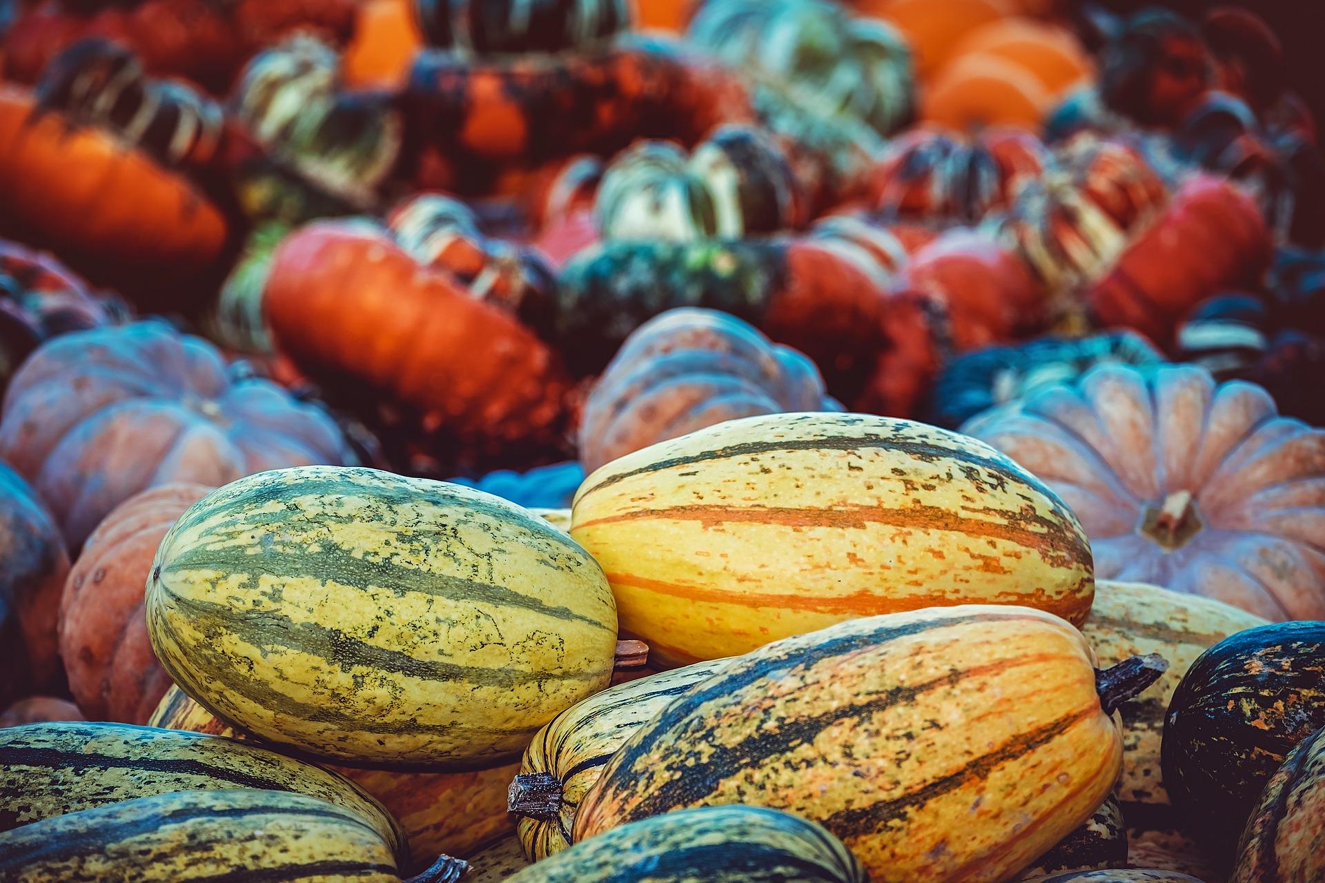 pumpkin-3759587_1920